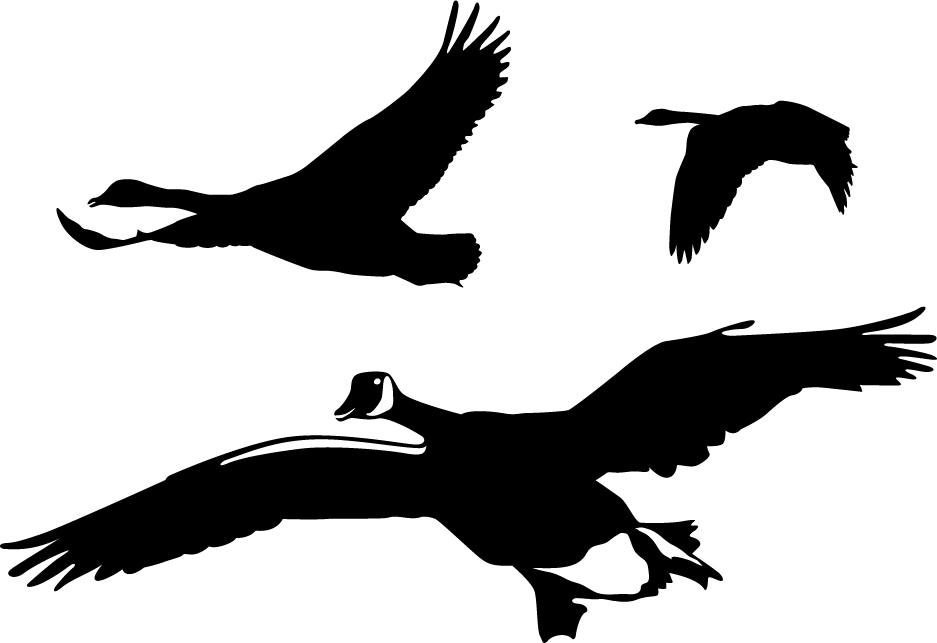 geese flyover wall decal
