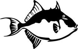 Triggerfish Decal