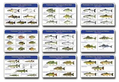North Carolina Saltwater Fish ID Chart http://www.identicards.com/productcart/pc/Fish-Ident-I-Cards-Set-p5074.htm