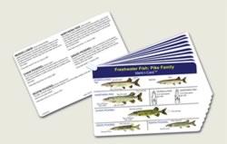 Fish Identification Cards