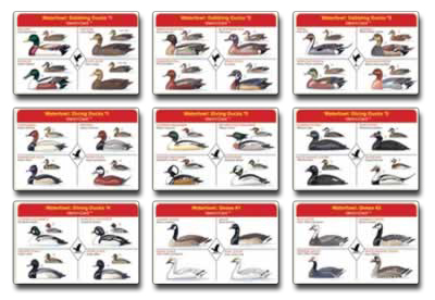 Freshwater waterfowl ident i cards