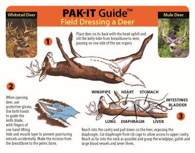 field dressing deer diagram enthusiast wiring diagrams u2022 rh rasalibre co Whitetail Deer Butchering Diagram Whitetail Deer Butchering Diagram