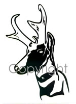 Antelope head Decal