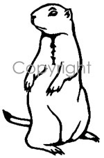 Prairie dog drawing step by step for Prairie dog coloring page