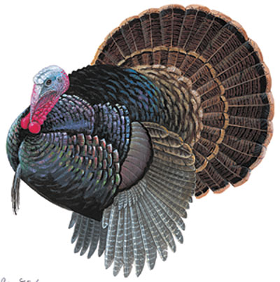 Wildlife Color Decals Turkey Full Color Turkey Sticker