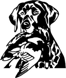 Hunting Decals Detailed Lab Head With Mallard - Sporting dog decals