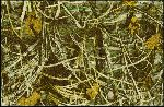 Realtree Max 4 Solid Camo Area Rug