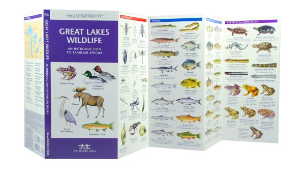 texas freshwater fish identification pocket guide