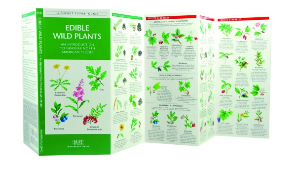 Guide To Edible Wild Plants Pdf - mypgchealthyrevolution