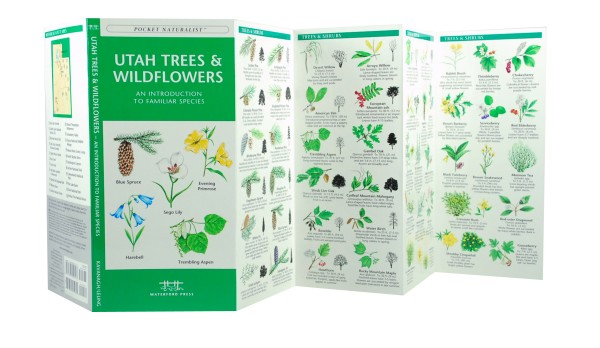 12 Species of Shady Ash Trees - The Spruce