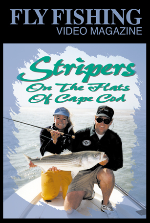 Fly fishing adventure striped bass stripers on the flats for Fly fishing massachusetts